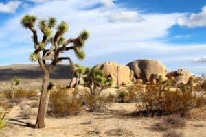vegetation in the desert
