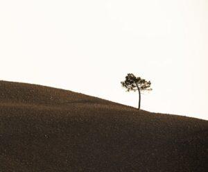 Single small tree atop a arid hill
