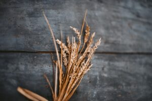 kernals of wheat upon a wooden table