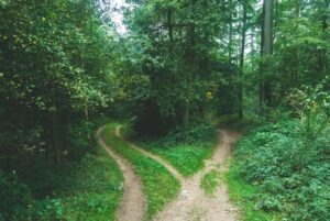two diverging paths in a forest